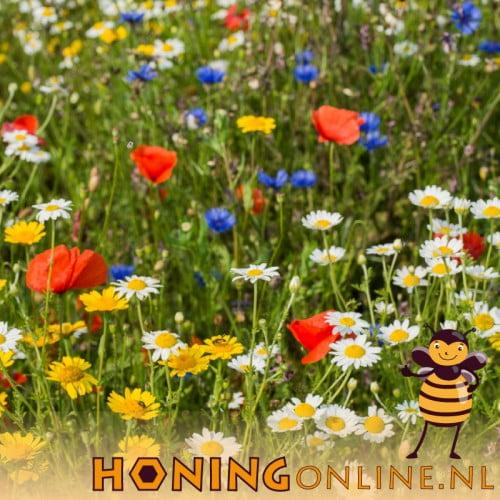 Biologisch Bloemen Mengsel Kippen Bijen Vliders